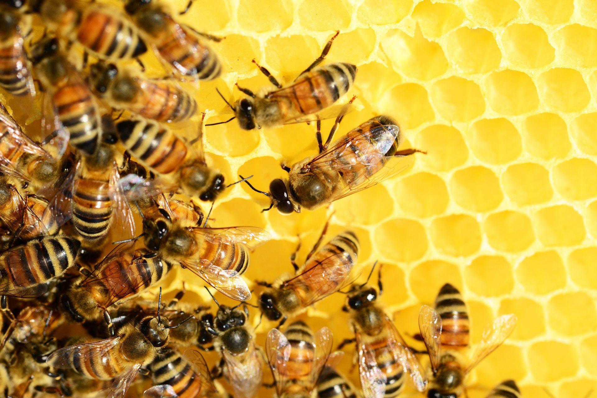 Raw desert Honey Bees Pahrump Honey Company